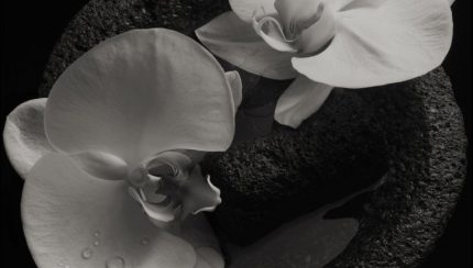 Flower Corpse